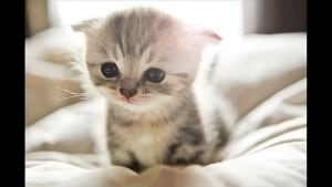 cute kitten that will die if you do cascade testing
